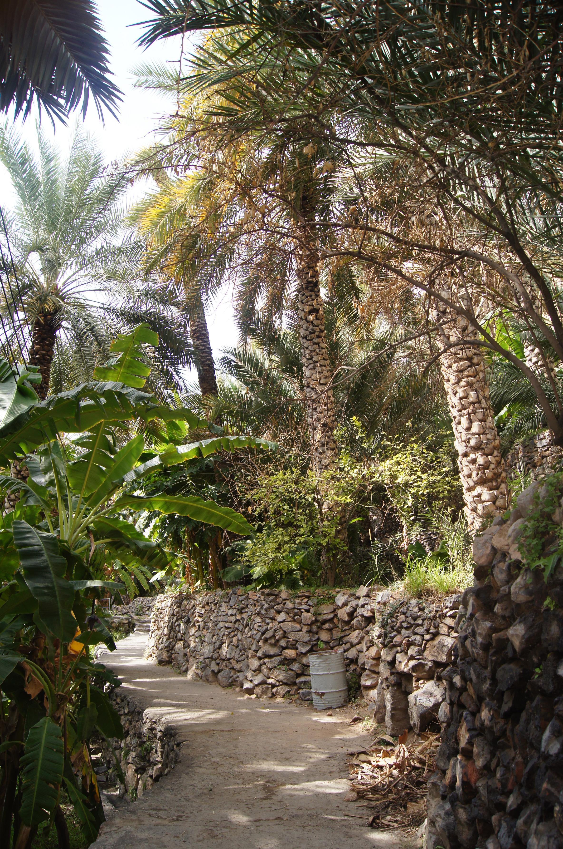 tours   Miriam\'s Omani Adventures